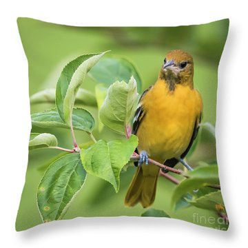 Baltimore Oriole Closeup Throw Pillow