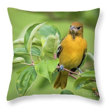 Baltimore Oriole Closeup Throw Pillow by Ricky L Jones