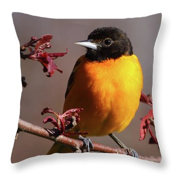 Baltimore Oriole II Throw Pillow