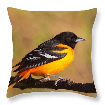Baltimore Oriole IIi Throw Pillow