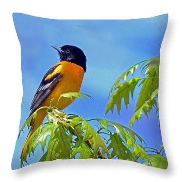 Throw Pillow featuring the photograph Baltimore Oriole In An Oak Tree by Rodney Campbell