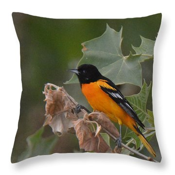 Baltimore Oriole In Sycamore Tree Throw Pillow by Alan Lenk