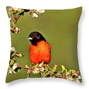 Baltimore Oriole Throw Pillow by James F Towne