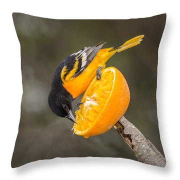 Baltimore Oriole On Orange Throw Pillow