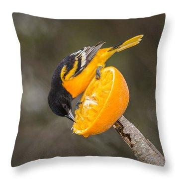 Baltimore Oriole On Orange Throw Pillow