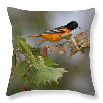 Baltimore Oriole Out On A Limb Throw Pillow by Alan Lenk