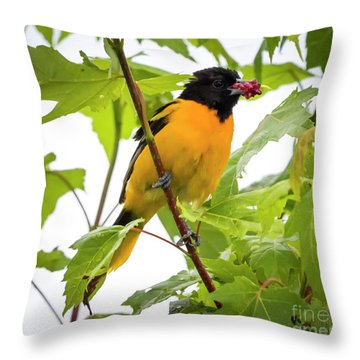 Throw Pillow featuring the photograph Baltimore Oriole With Raspberry  by Ricky L Jones