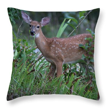 Throw Pillow featuring the photograph Bambi by Rick Friedle