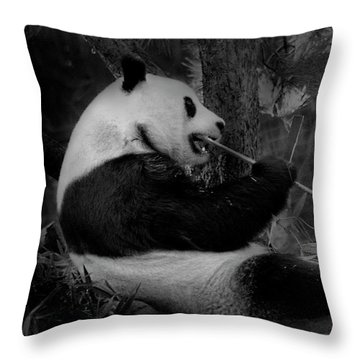 Bamboo, Bamboo, Bamboo Throw Pillow