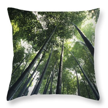 Bamboo Forest Throw Pillow by Mitch Warner - Printscapes