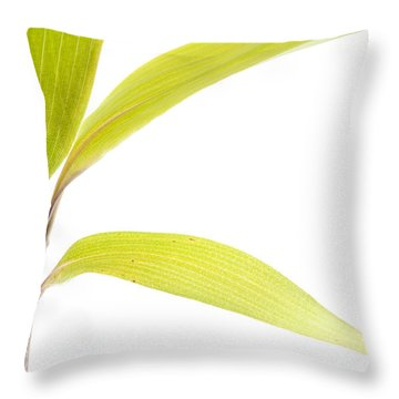 Bamboo Meditation 2 Throw Pillow by Carol Leigh