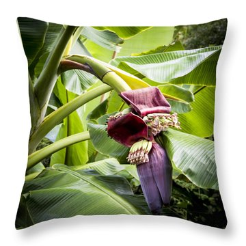 Banana Beginnings Square Throw Pillow by Kerri Ligatich