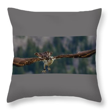 Throw Pillow featuring the photograph Banded But Bold by Yeates Photography