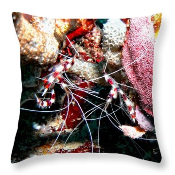 Banded Coral Shrimp - Caught In The Act Throw Pillow by Amy McDaniel