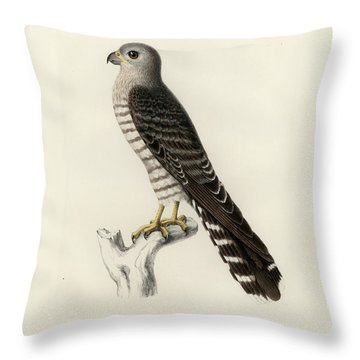 Throw Pillow featuring the drawing Banded Kestrel by J D L Franz Wagner