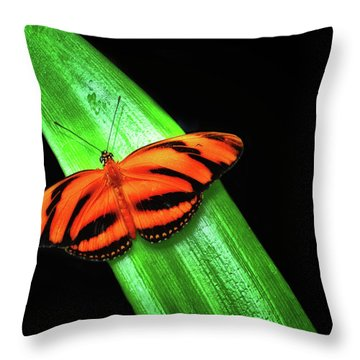 Banded Orange Longwing Throw Pillow