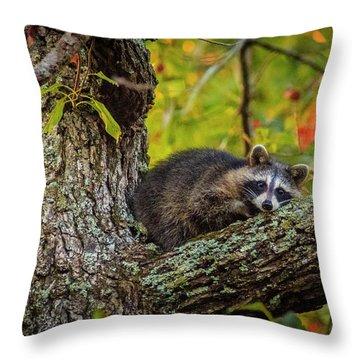 Bandit #2 Nap Time Throw Pillow