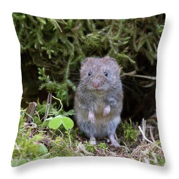 Throw Pillow featuring the photograph Bank Vole - Scottish Highlands by Karen Van Der Zijden