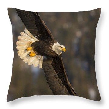 Banking Bald Eagle Throw Pillow