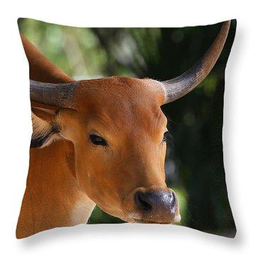 Banteng  Throw Pillow