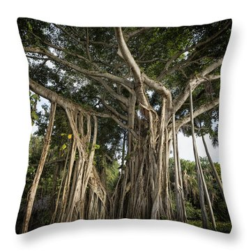 Throw Pillow featuring the photograph Banyan Tree At Bonnet House by Belinda Greb