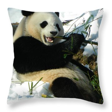 Bao Bao Sittin' In The Snow Taking A Bite Out Of Bamboo2 Throw Pillow