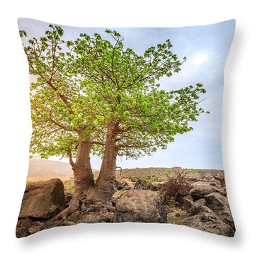 Throw Pillow featuring the photograph Baobab Tree by Alexey Stiop