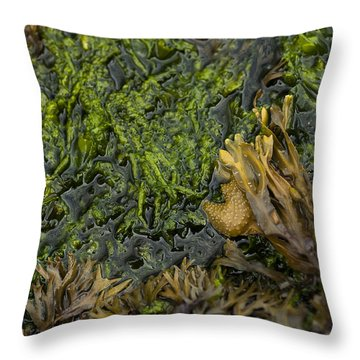 Throw Pillow featuring the photograph Bar Harbor Maine Coastal Life by Kevin Blackburn