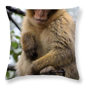 Throw Pillow featuring the photograph Barbary Ape by Ramona Johnston