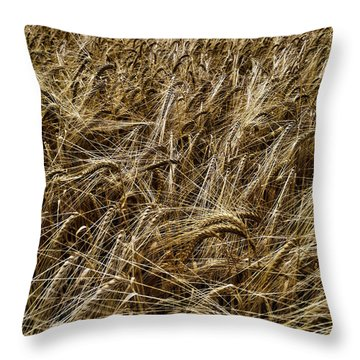 Throw Pillow featuring the photograph Barley by RKAB Works