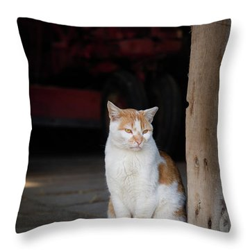 Throw Pillow featuring the photograph Barn Cat And Tractor by Dennis Dame