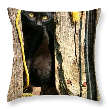 Barn Cat Throw Pillow by Kristin Elmquist