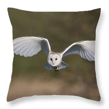 Barn Owl Approaching Throw Pillow