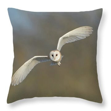 Barn Owl Hunting In Worcestershire Throw Pillow