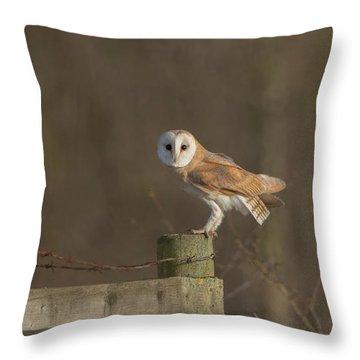 Barn Owl On Fence Throw Pillow