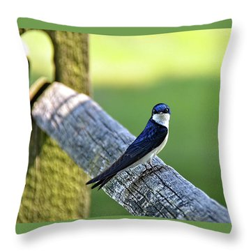 Barn Swallow Looking Angry Throw Pillow