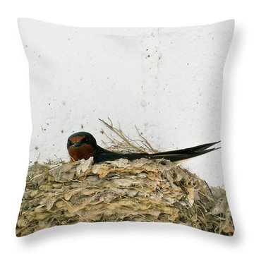 Barn Swallow Nesting Throw Pillow by Douglas Barnett