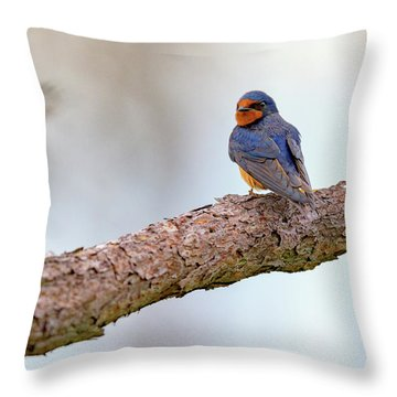 Barn Swallow On Assateague Island Throw Pillow by Rick Berk