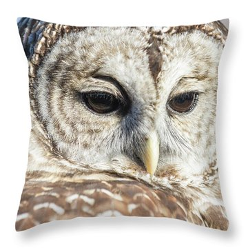 Barred Owl 1 Throw Pillow