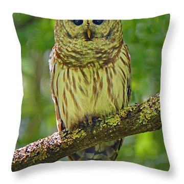 Barred Owl Throw Pillow by Alan Lenk