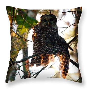 Barred Owl At Sunrise Throw Pillow
