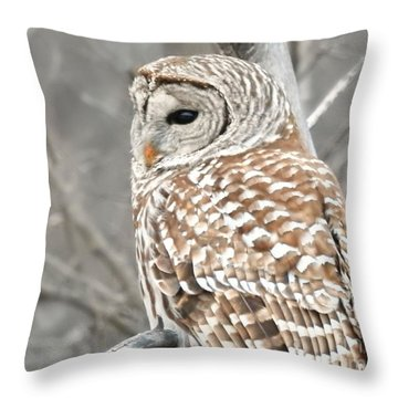 Barred Owl Close-up Throw Pillow by Kathy M Krause