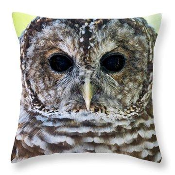 Barred Owl Closeup Throw Pillow