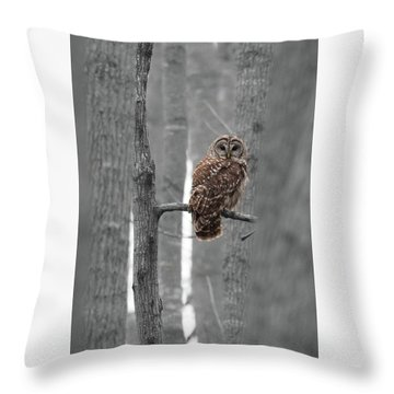 Barred Owl In Winter Woods #1 Throw Pillow