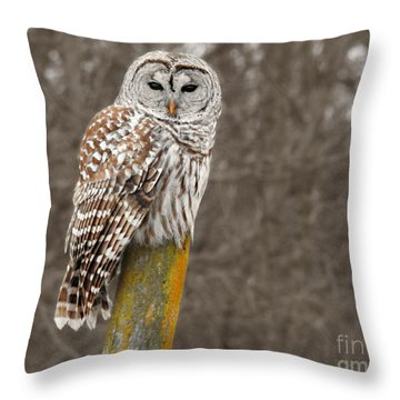 Barred Owl Throw Pillow by Kathy M Krause