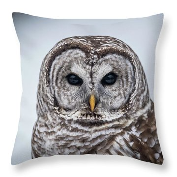 Throw Pillow featuring the photograph Barred Owl by Paul Freidlund