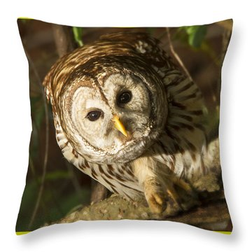 Barred Owl Peering Throw Pillow