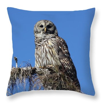 Barred Owl Portrait Throw Pillow
