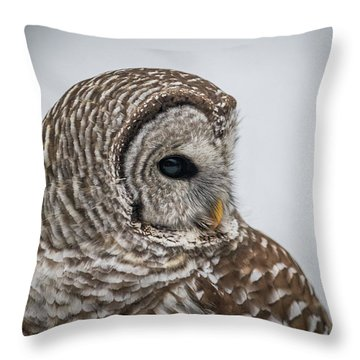 Throw Pillow featuring the photograph Barred Owl Portrait by Paul Freidlund