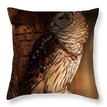 Throw Pillow featuring the digital art Barred Owl Sleeping In A Tree by Chris Flees